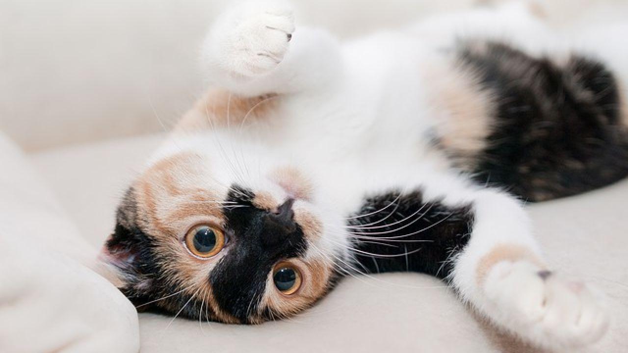 كيف أعرف نوع قطتي Cat Behavior Cat Care Cat Training