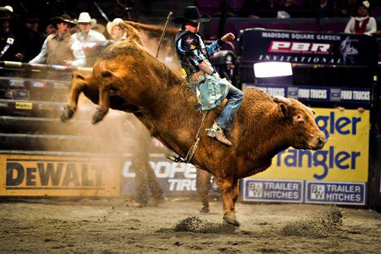 PBR Bull Riding Wallpaper