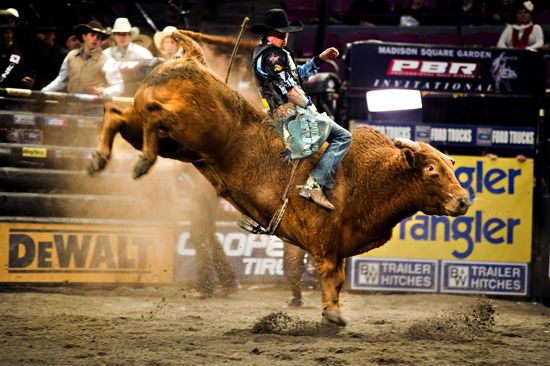 Pbr Bull Riding Wallpaper Wallpapersafari Pbr Bull Riding Bull Riding Pbr