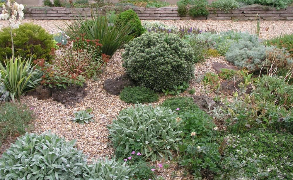 Kiesgarten: Steine, Gräser Und Bunte Blumen Gartengestaltung Mit Steinen Und Grsern Modern