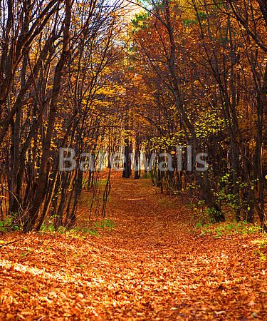 NATURE POSTER Photo Picture Poster Print Art A0 A1 A2 A3 A4 AUTUMN AD976