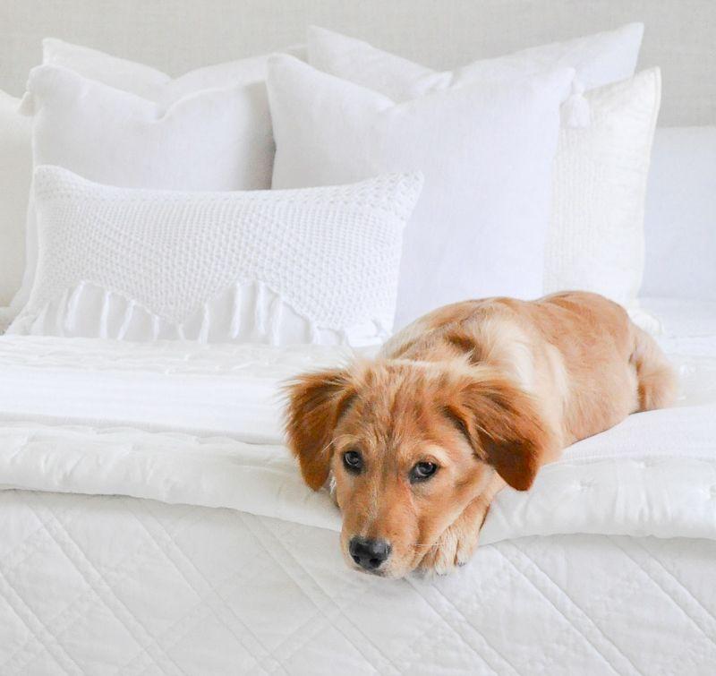 Meet Our New Puppy My Top 10 Puppy Essentials New Puppy