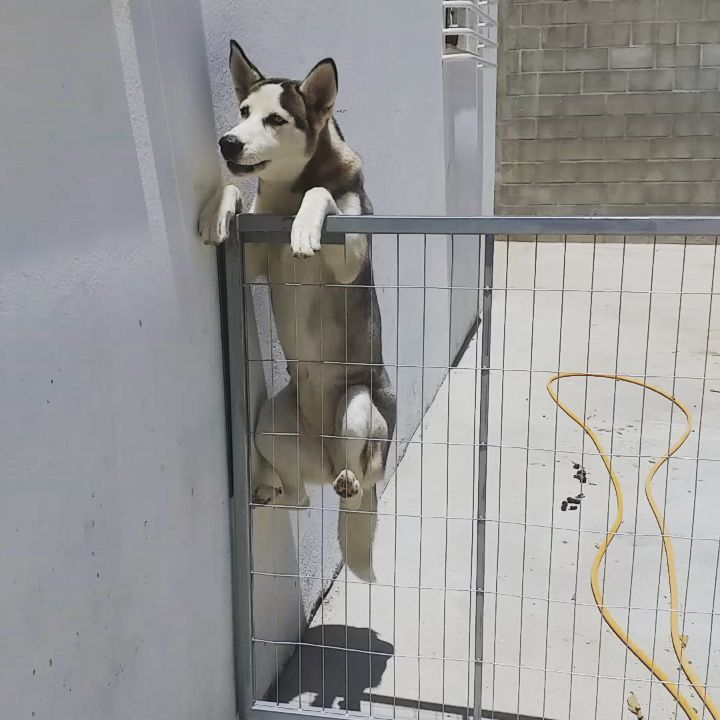 New The 10 Best Home Decor With Pictures Oh My God Husky