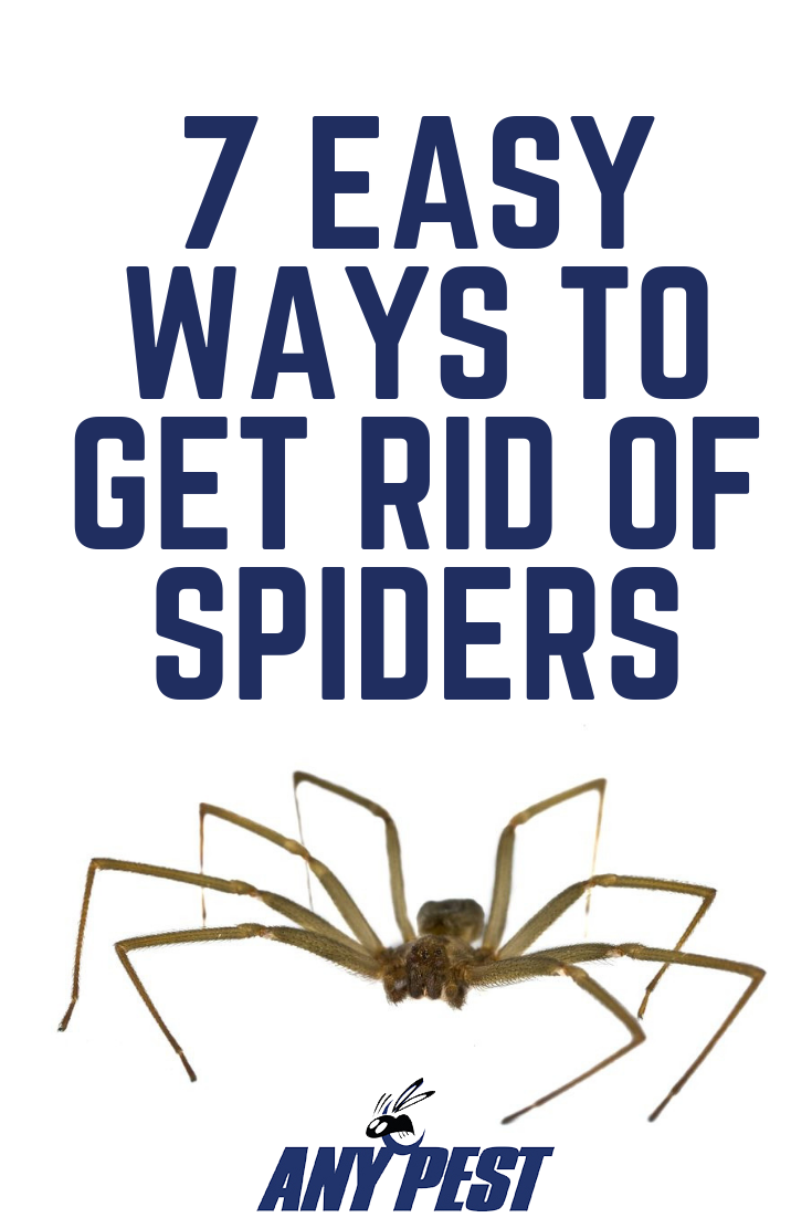 2eeca6196cce5d2ab004d5dbeba36206 - How To Get Rid Of A Spider Infestation Outside