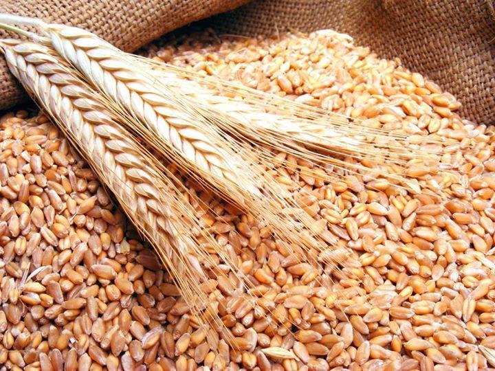 تجار مصر تتلقى عروضا من 3 موردين في مناقصة لشراء القمح صورة ارشيفية قال تجار إن الهيئة العامة للسلع التموينية ف Hurghada Egypt Stuff To Do Weights For Women