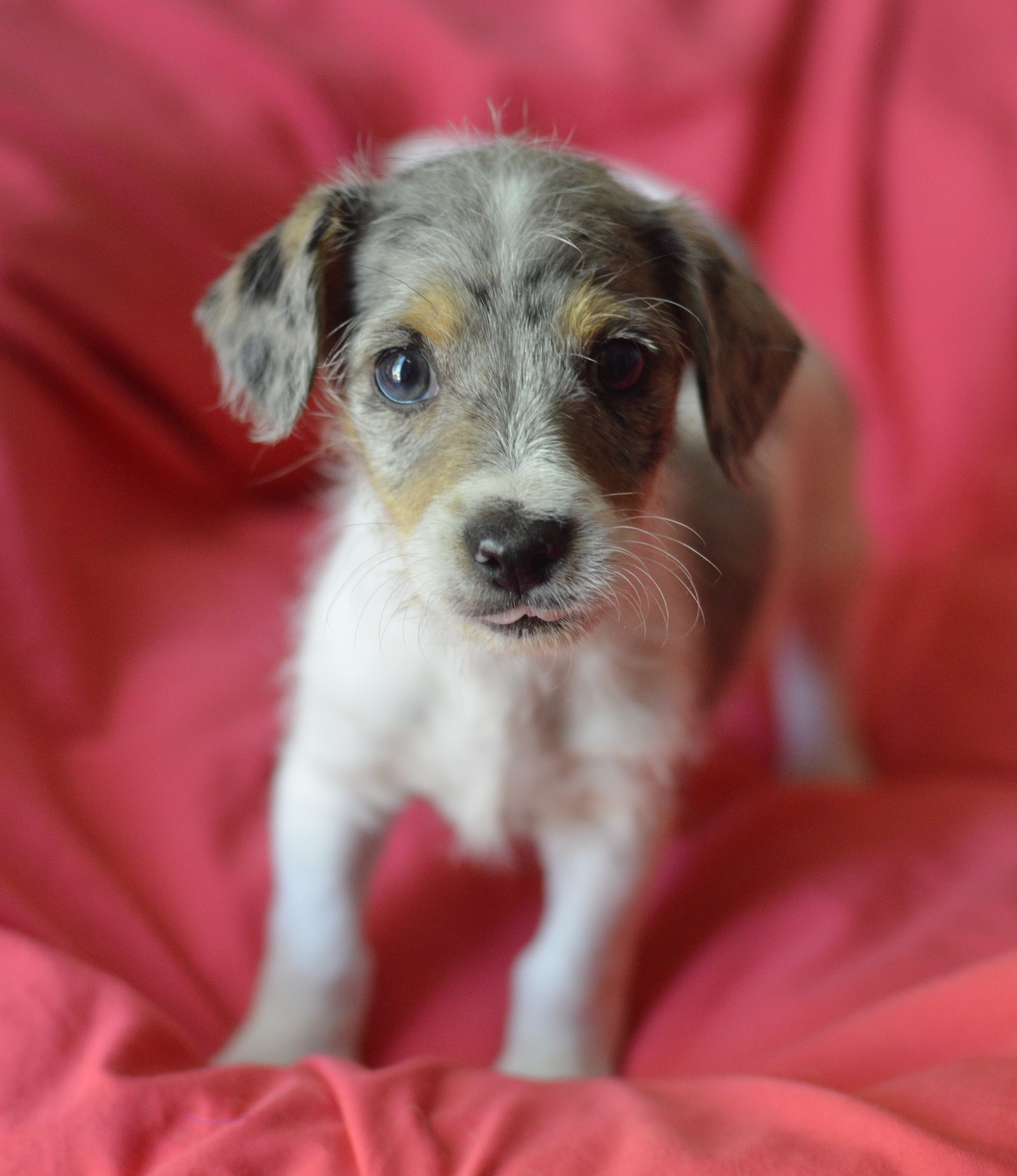 Adopt Sawyer on #petadoption