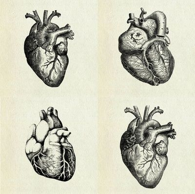 Anatomical Heart Illustrations Want This As A Tattoo