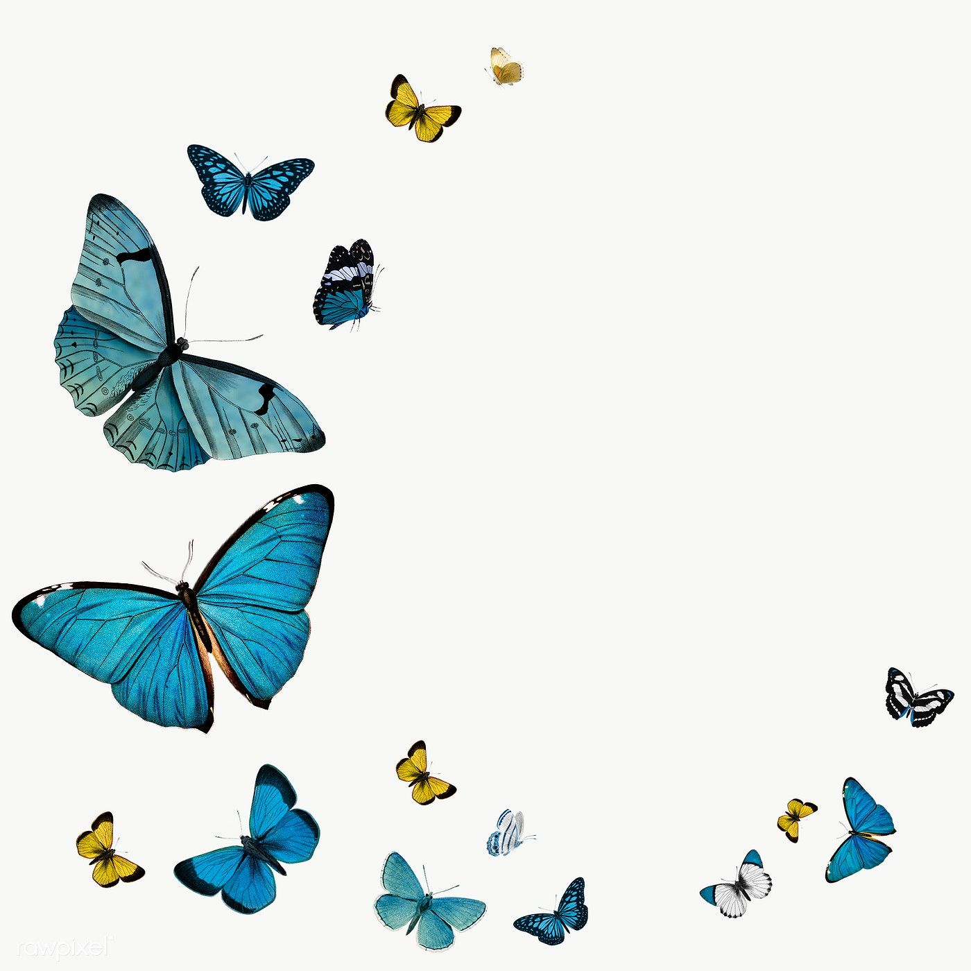 Download Premium Png Of Vintage Common Blue Butterflies With A Copy Space Butterfly Illustration Common Blue Butterfly Blue Butterfly