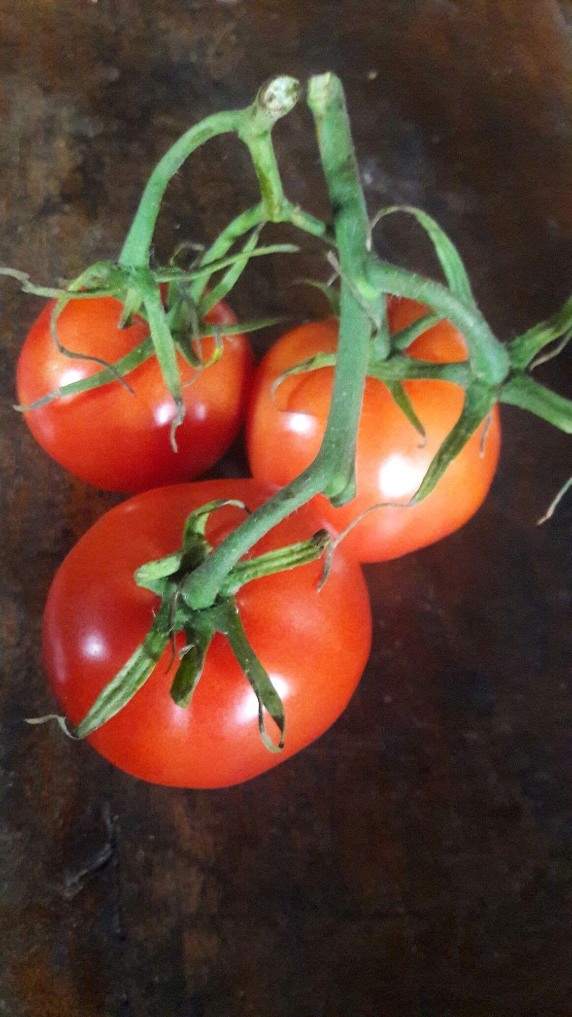 Tomates cosecha de Guatemala