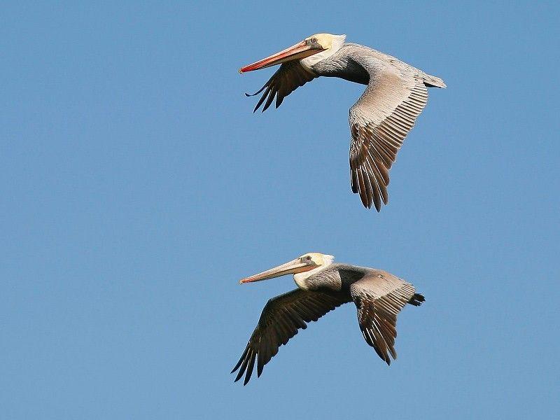 Aves Volando En El Cielo Google Search Aves Volando Fotos De