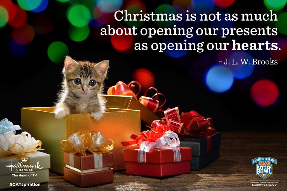 Kittens for Christmas!
