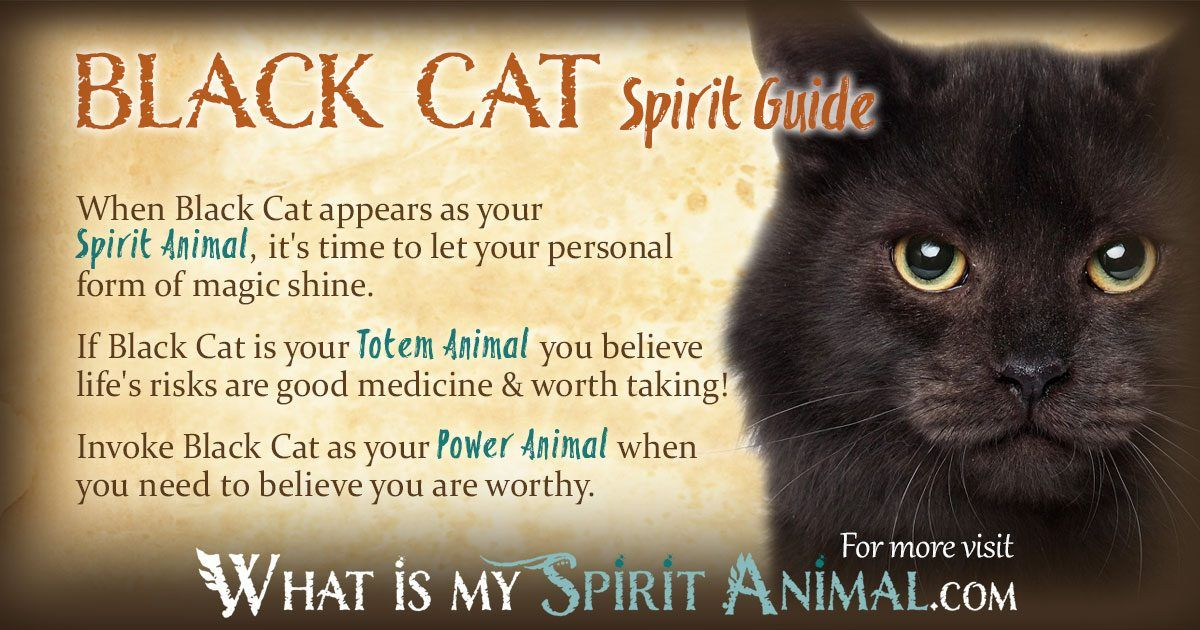Black Cat Symbolism & Meaning Cat symbolism, Power