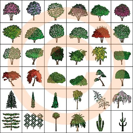 Landscape Design Symbols Ornamental Trees Color Garden