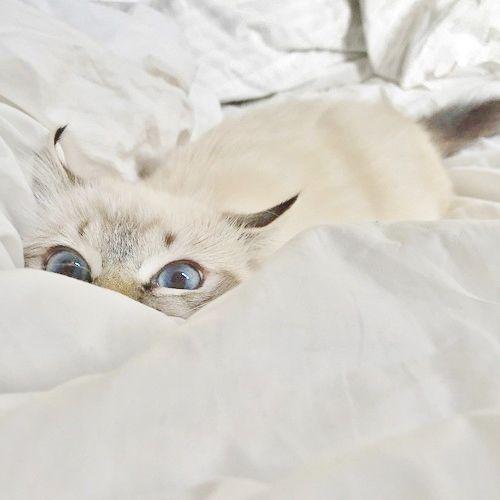 Pin Von Camila Pamplona Auf Bicharada Katzenliebe Seltsame Katzen Und Schlafende Katze