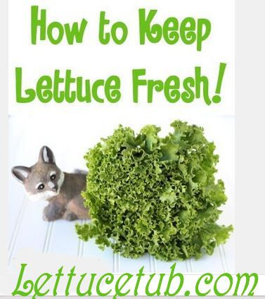 The Freshest Lettuce is the lettuce you grow in your Kitchen or Deck. A…