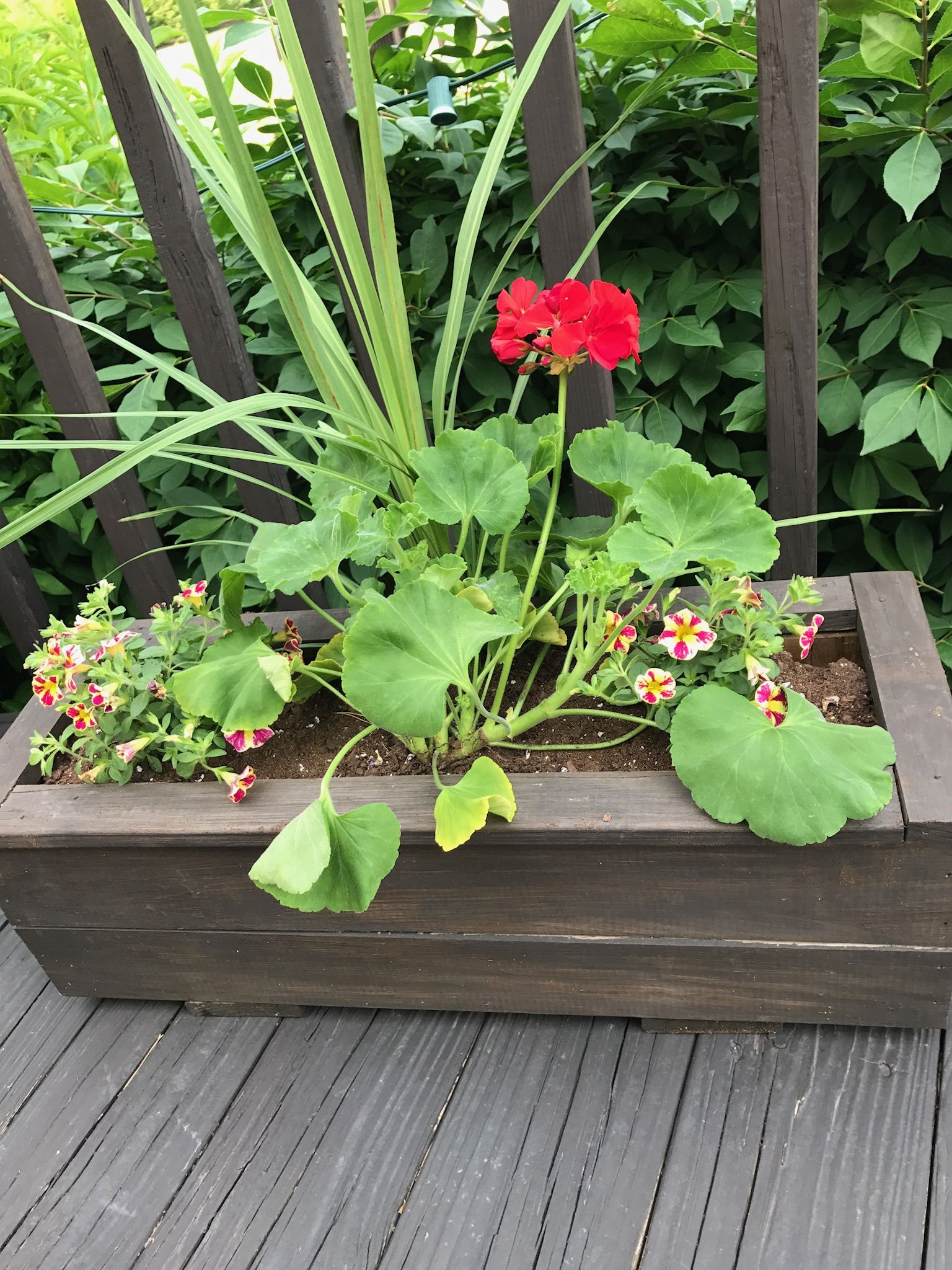 and deck planters is cakegirlkc what rail com planter
