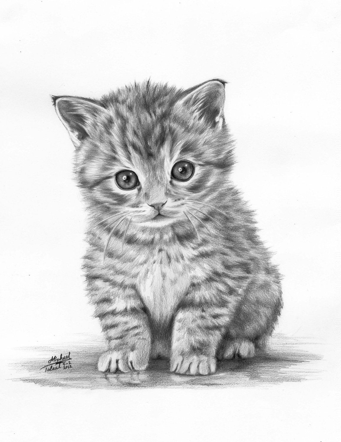 Animals Drawings 100 00 Via Etsy Animal Drawings Kitten Drawing Cat Art