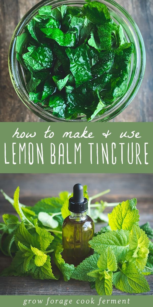 Lemon balm has many health benefits and one of the best ways to use it is in a tincture Learn how to make this simple lemon balm tincture using fresh lemon balm from your...