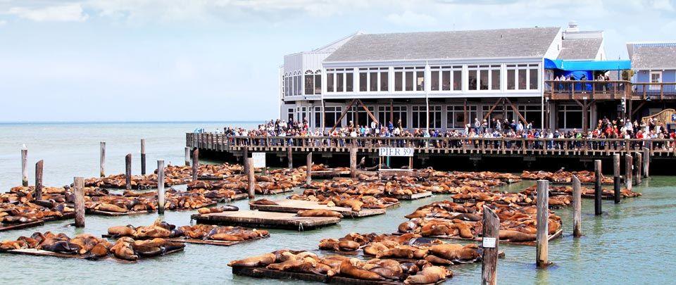 Hotels In San Francisco Near Pier  Fisherman