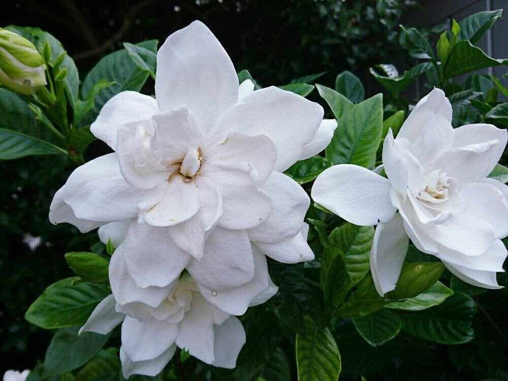 ボード Dailygreensnap 2020 06 29 オススメの植物 花の写真 のピン