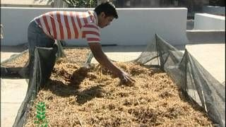 Mushroom Cultivation in India- very informative video