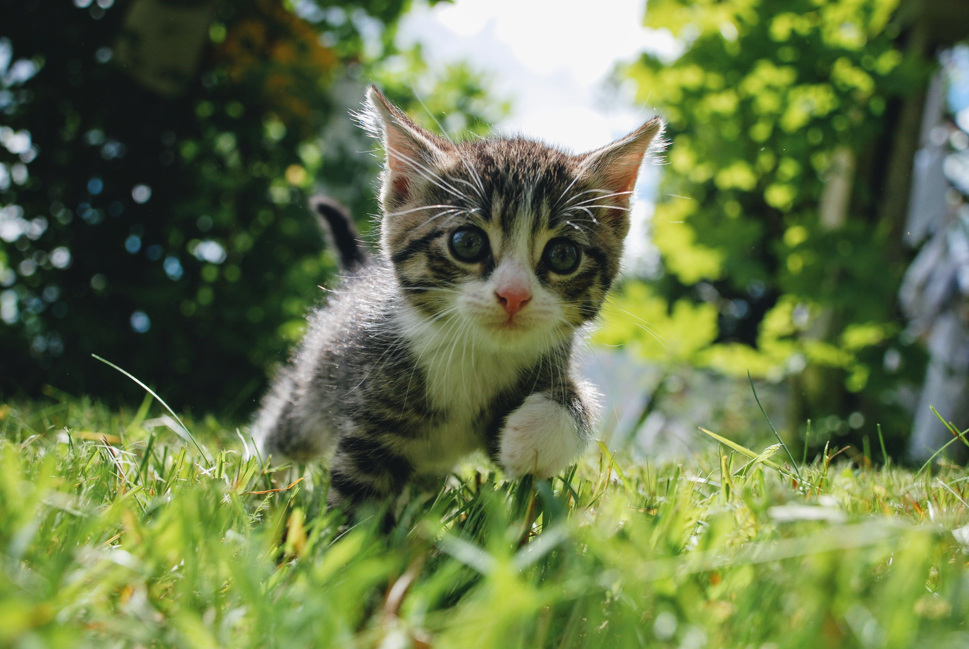 Kittens Grow And Change A Lot During Their First Year Find Out What Happens Between The Ages Of Three Months And Six Months Old Happy Facts Kitten Cats