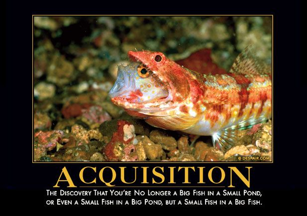 Acquisition Big fish, Fish, Demotivational posters