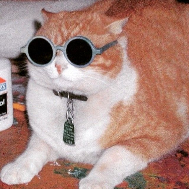 #子猫  #小猫  #仔猫 #猫 #neko #猫 #cat #cats #kitten #kittens #kitty #kitties #kittycat #meow #meowmeow #purr #cuteattack #고양이