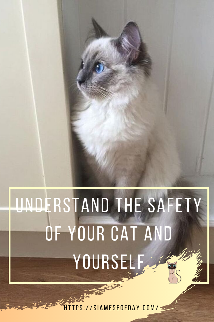 How To Calm A Nervous Cat Kitty Siamese Of Cat Cats Cat Day Siamese Dream