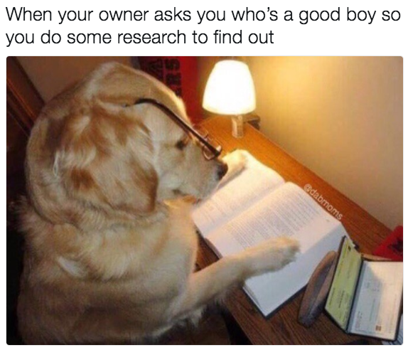 100 Dog Memes That Will Keep You Laughing For Hours Funny Dog Pictures Funny Dogs Dog Pictures