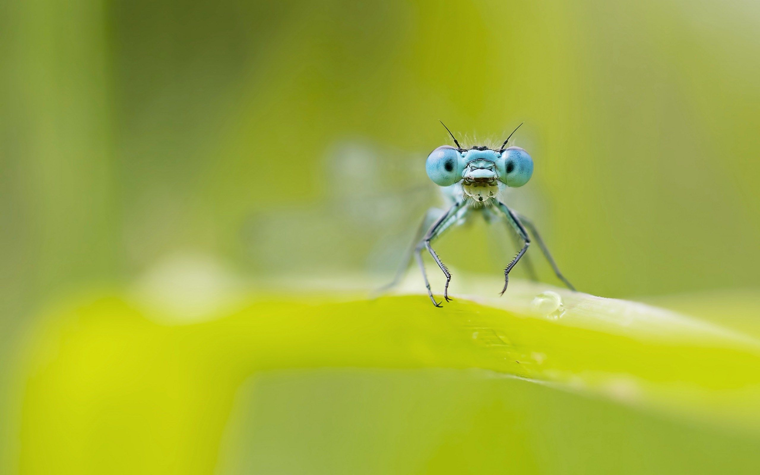 dragonfly, animals, nature, macro, drop, morning, photo, beauty