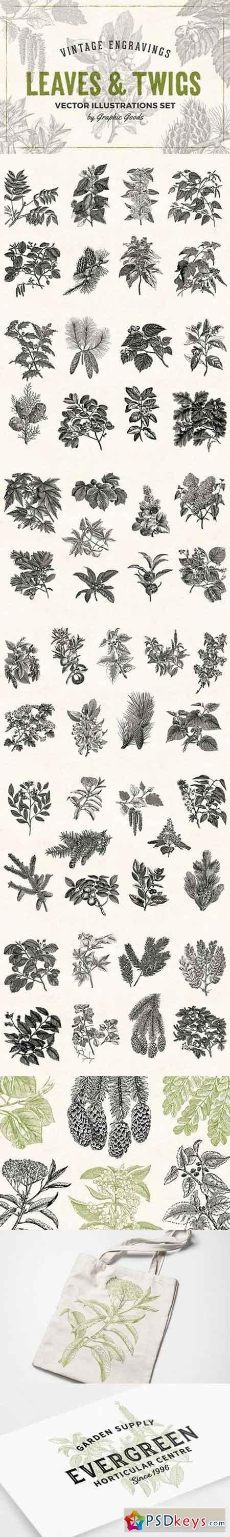 Leaves & Twigs Vintage Illustrations 1633688