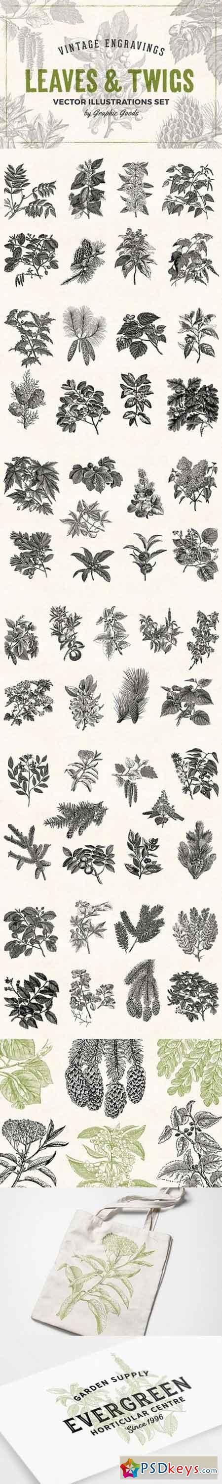 Leaves & Twigs Vintage Illustrations 1633688
