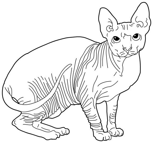 cat color pages printable cats coloring pages sphynx cats kids printables coloring pages