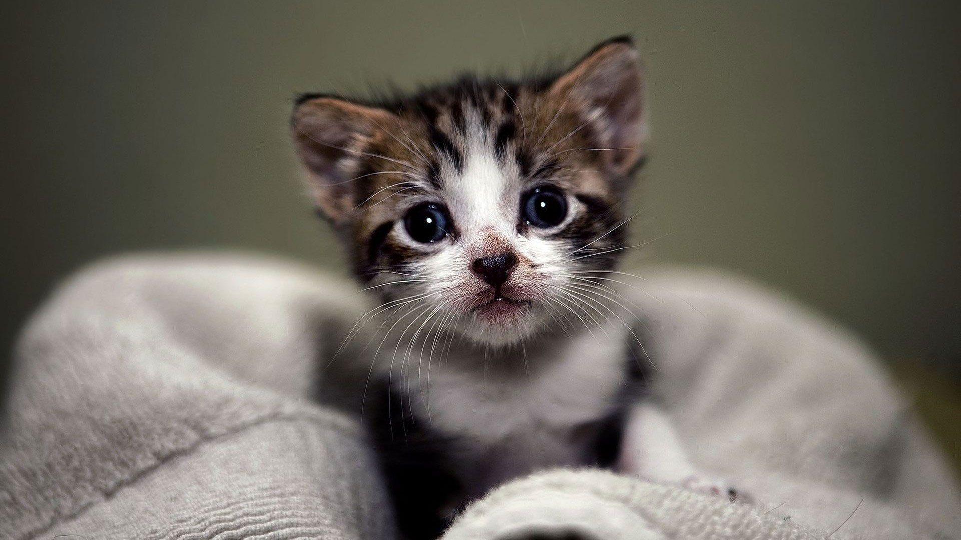 hd pics photos cute small kitten close up hd quality desktop background wallpaper