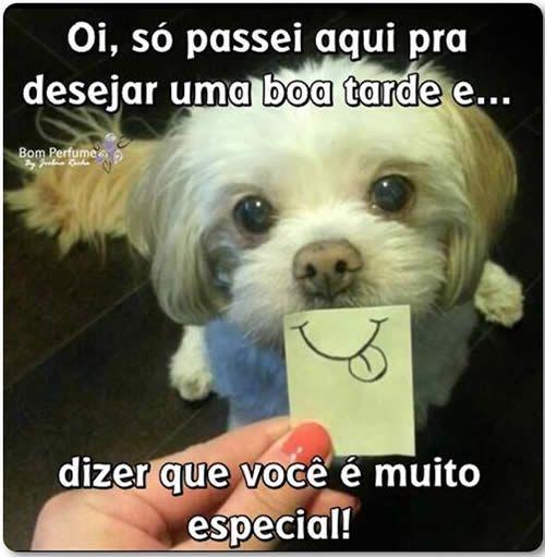 Imagens De Boa Tarde Engracadas Imagens Para Whatsapp Boa