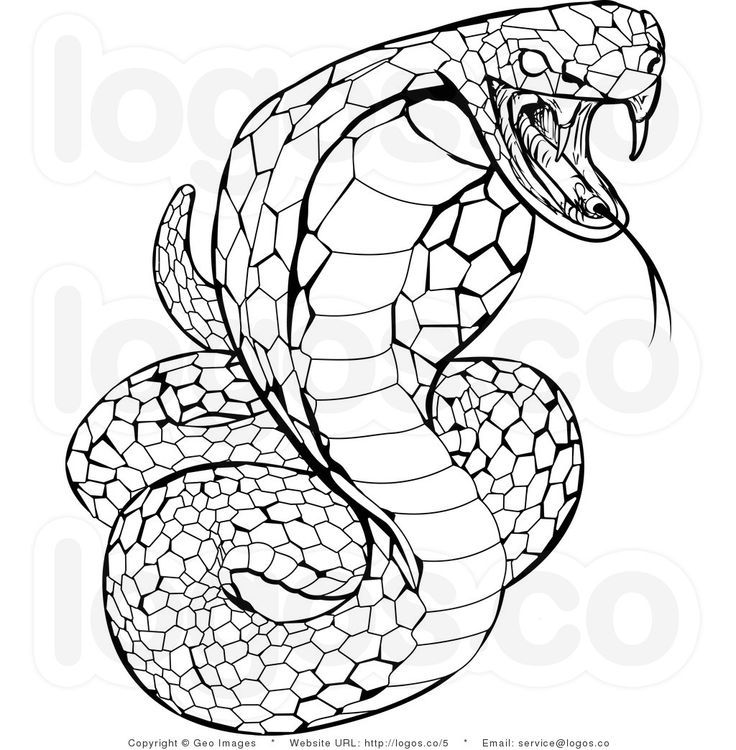 Image Result For Mosaic Coloring Pages Adults Snake