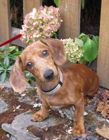 Rescue Me Portland Or Omg What A Cutie Meet Mylee Adorable