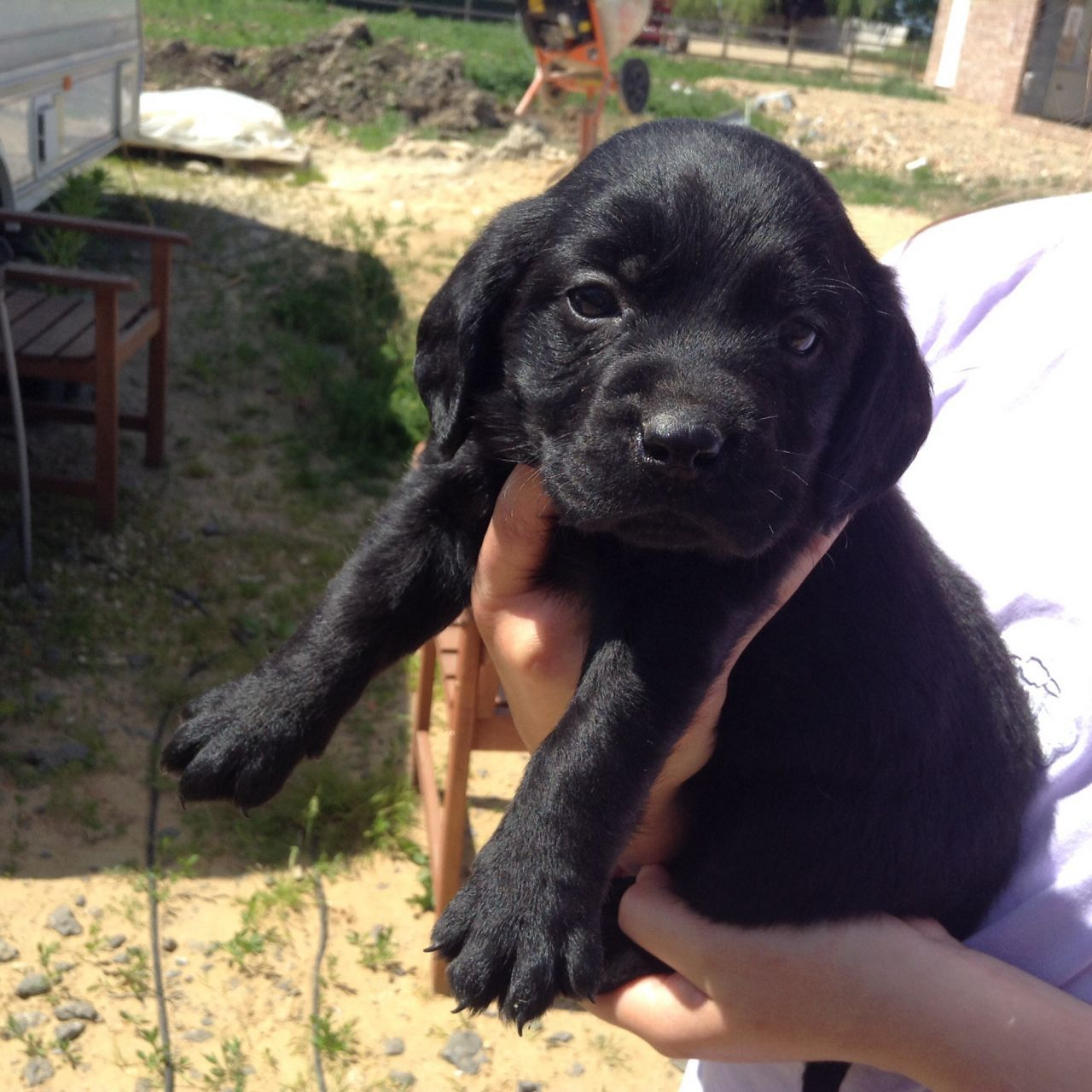 3 Adorable Cockerdor Pups For Sale Puppies For Sale Pup
