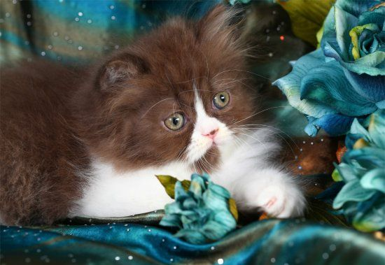 Pin En Kitties For Gg