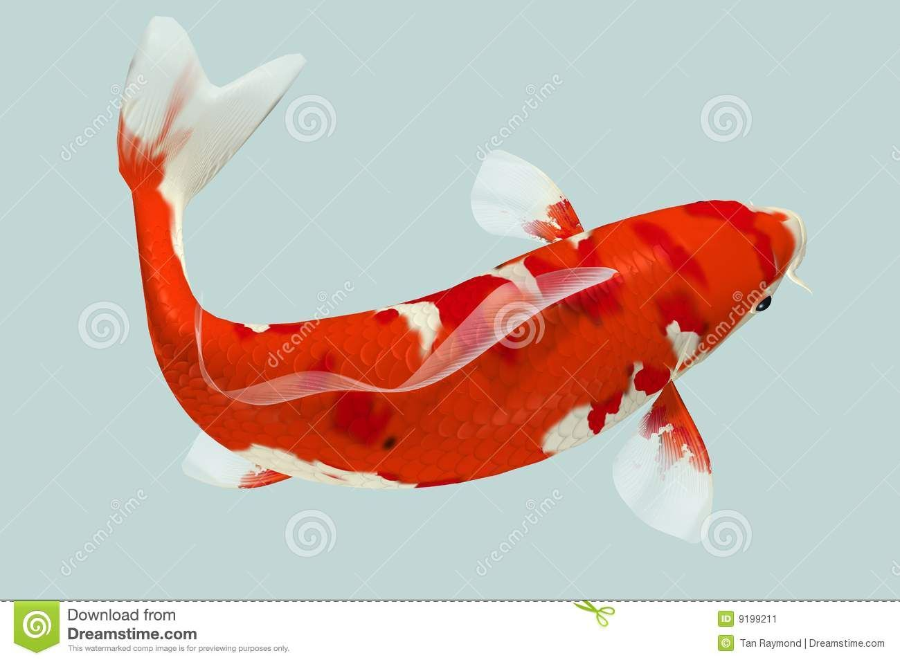 Related image | Koi Fish | Pinterest | Koi and Creatures