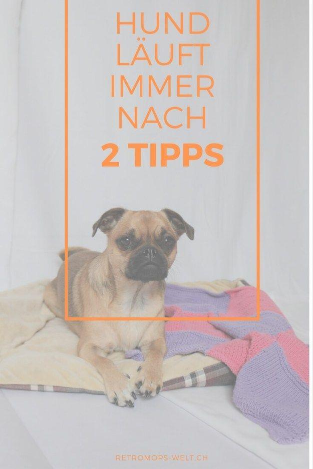 Was Tun Wenn Der Hund Einem Immer Nach Lauft 2 Tipps Hund Lauft Hunde Hunde Erziehen