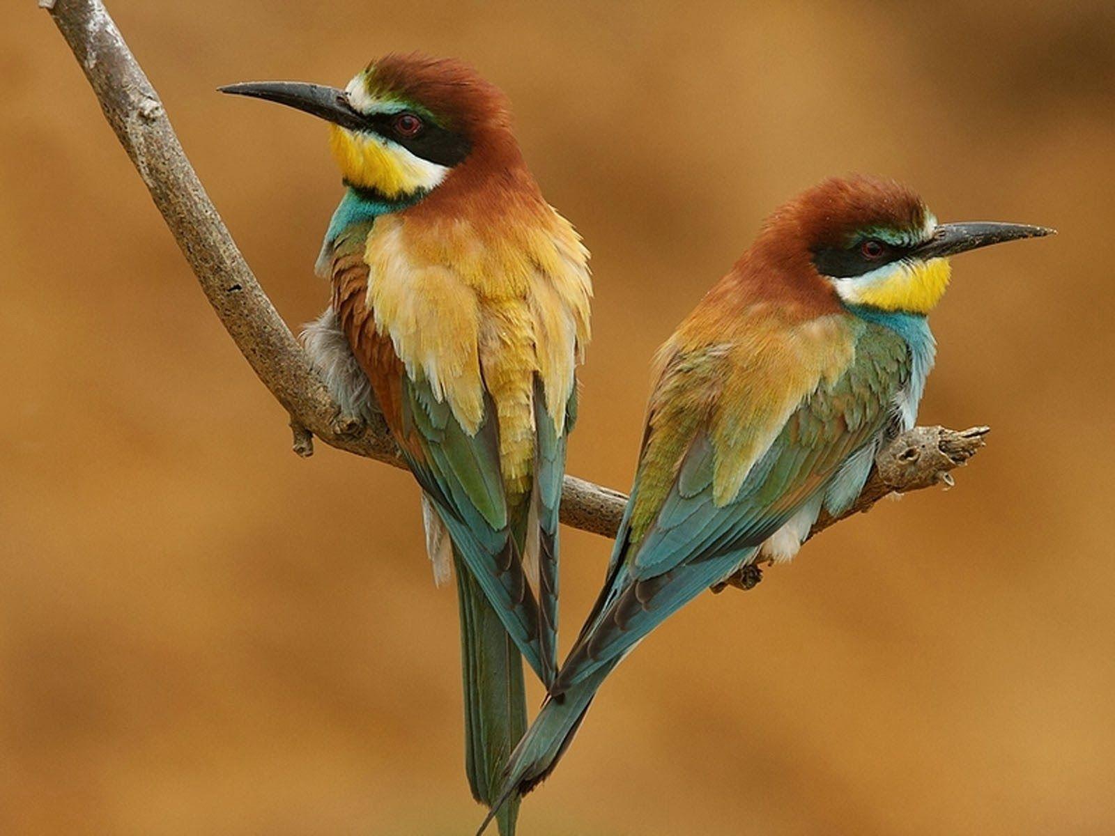 birds desktop wallpapers | wallpaper hd online | my birds