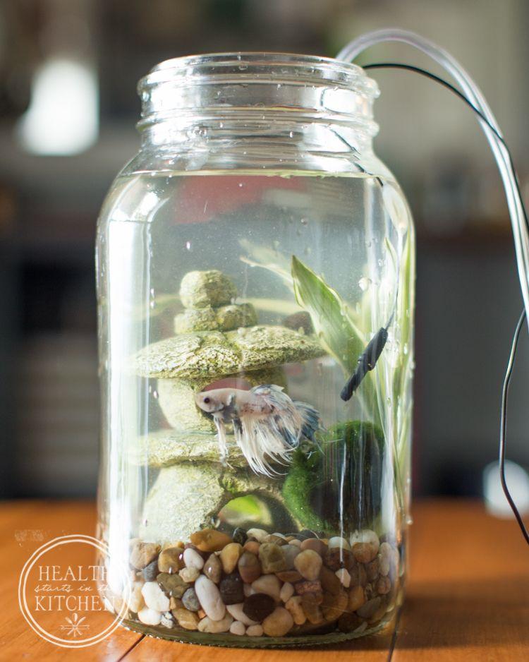 Aquariums & Tanks Fish & Aquariums Enthusiastic New Black Indoor Aquaponics System Fish Bowl Jar Water Cultivation Farming