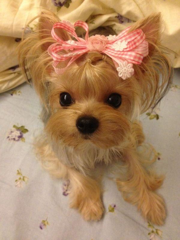 Puppuru Is Wearing My Handmade Hair Clip Like A Sweet Gift D By Mansour Zeidan