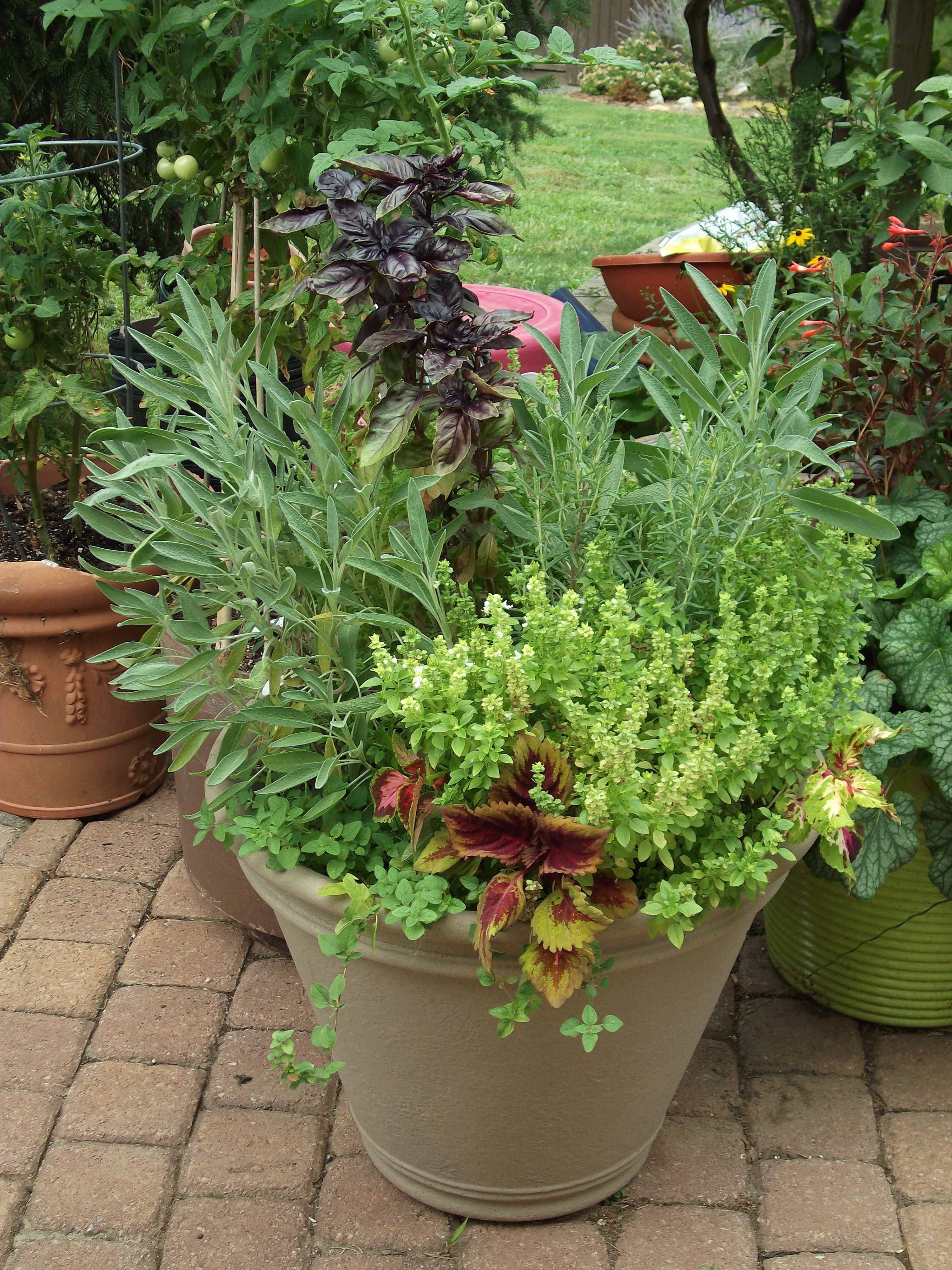 Herb Planter Pot Herb Pot Purple Basil Sage Oregano And Rosemary