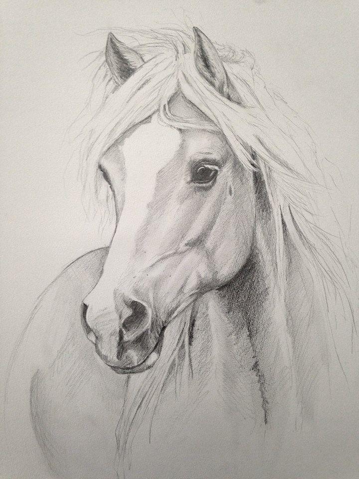 Pin de Donna H Rittiner en Horse paintings/ drawings | Pinterest ...