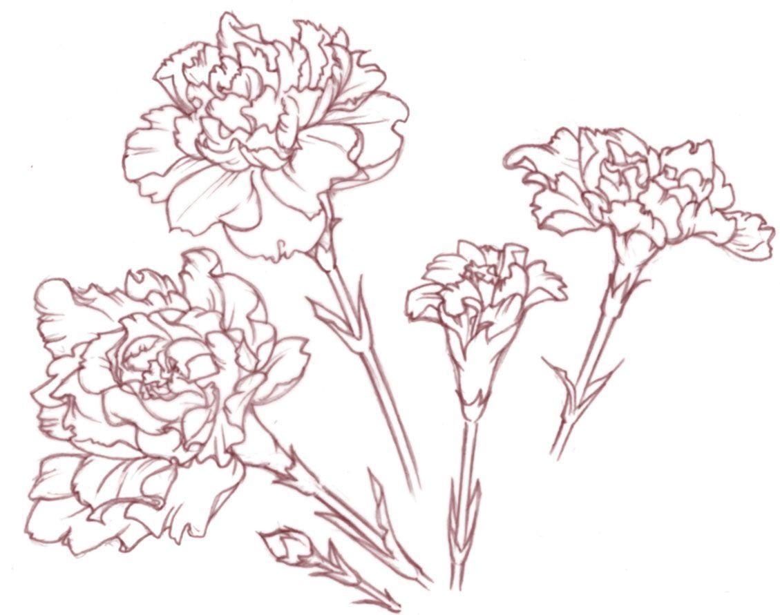 Carnation Flower Line Drawing : Gallery sketch spray carnation tattoos pinterest