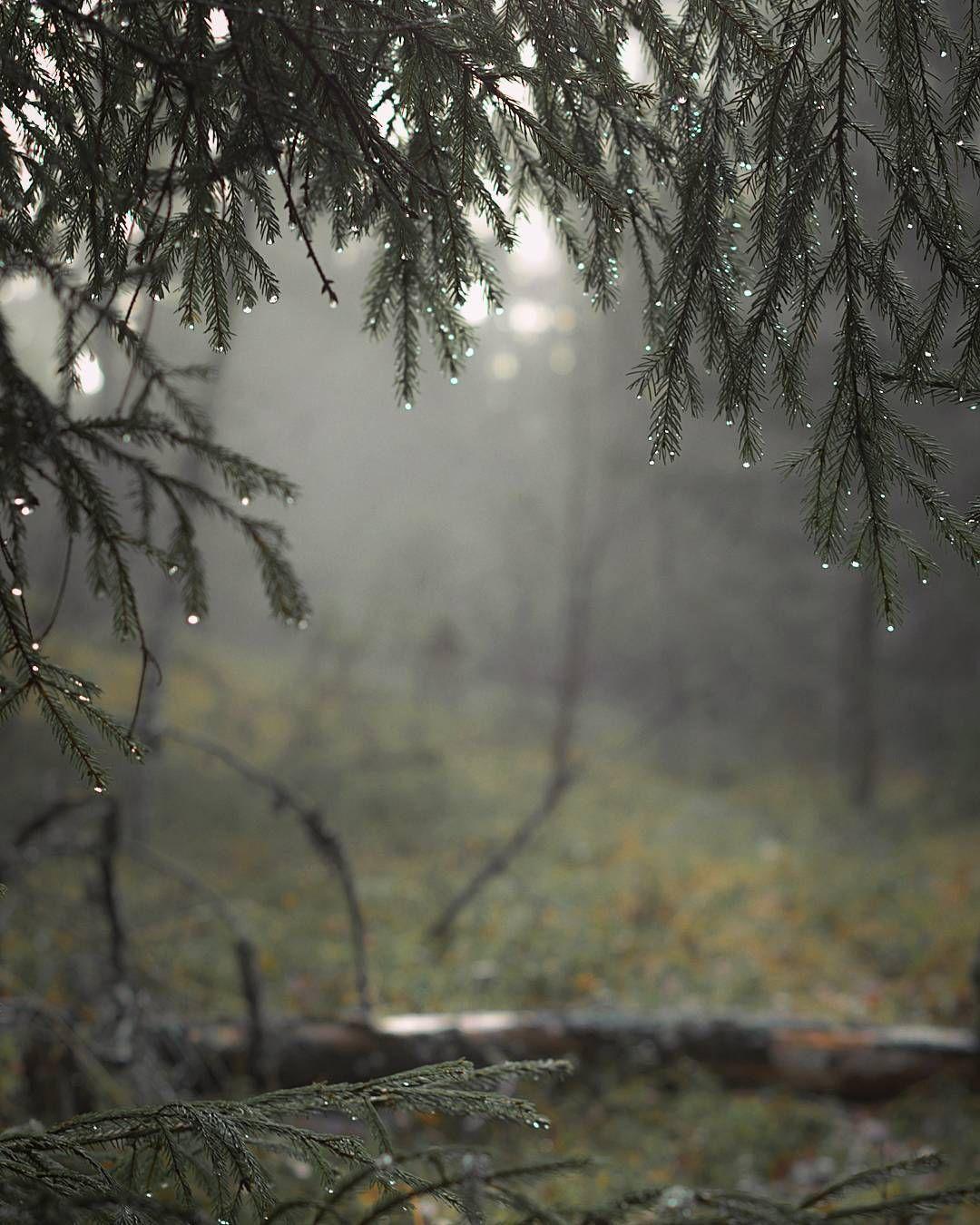 Whiskey Grit Photo Nature Nature Photography Rain Photography