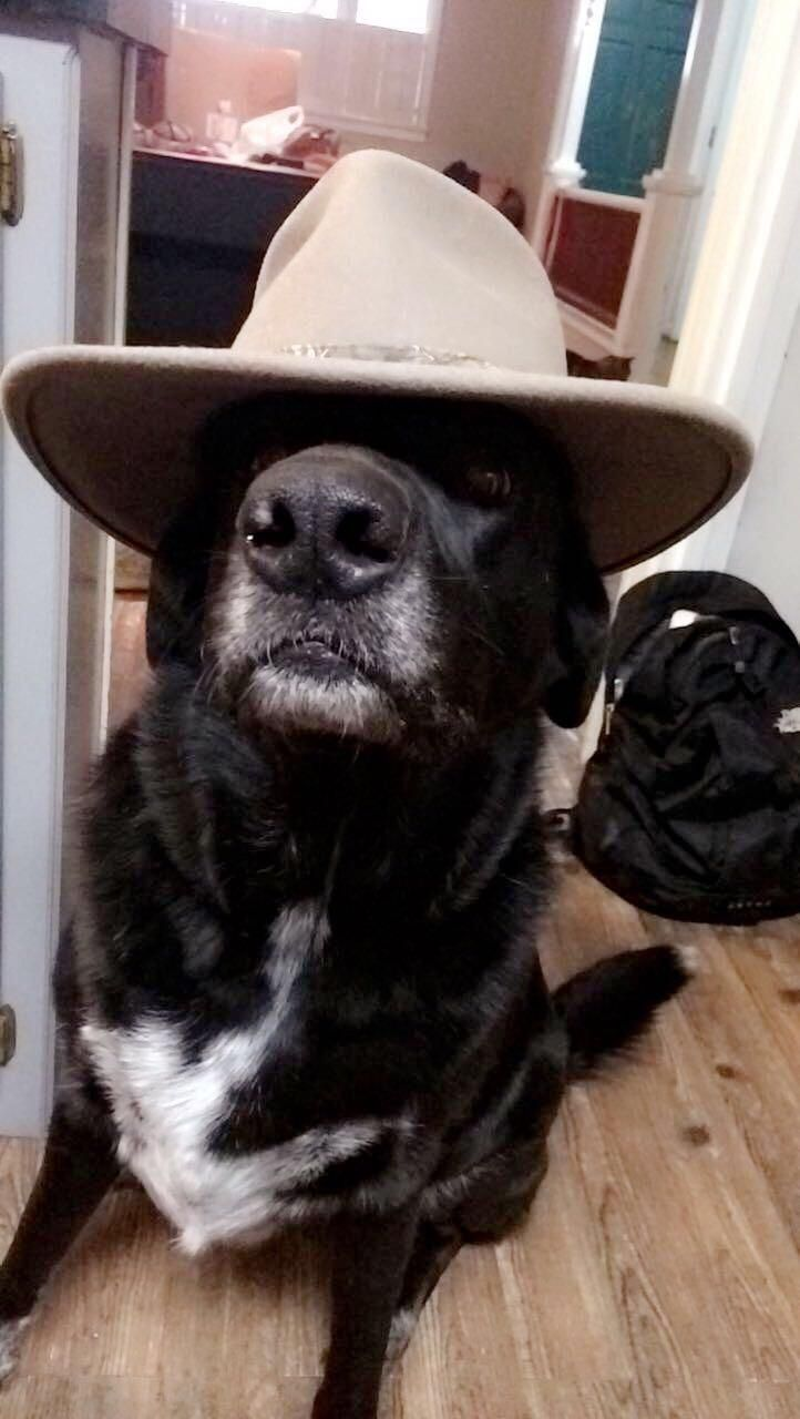 What In Tarnation Dog Full Picture